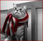 Regali Natale: Regali natalizi er i freddolosi