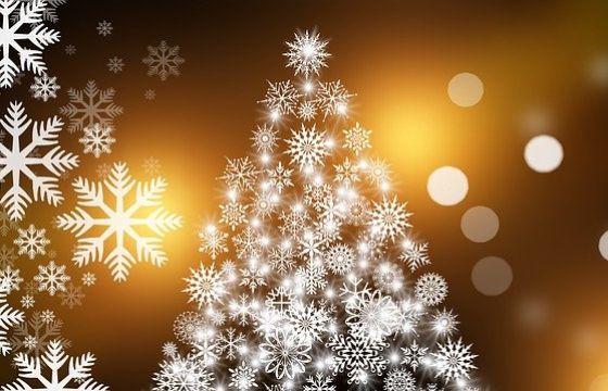 Albero Di Natale Vero Come Farlo Sopravvivere.Albero Di Natale Vero O Finto