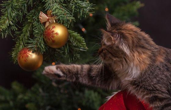 Albero Di Natale E Gatto Come Fare.Albero Di Natale Come Difenderlo Dai Gatti