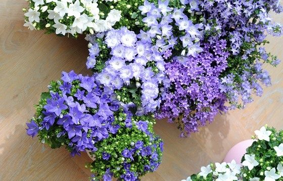 Piante balcone pieno sole idea creativa della casa e for Piante in vaso pieno sole