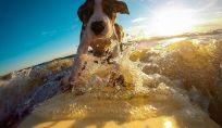 Consigli per una perfetta vacanza con il cane