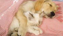 Cucce originali e fai da te per cani e gatti
