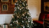 Le foto degli Alberi di Natale di Amando.it