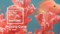 Colore pantone 2019 living coral