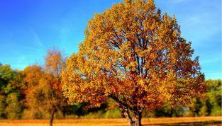 6 idee per un week end fuori porta in autunno