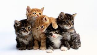Festa del gatto: un modo per celebrare i vostri mici