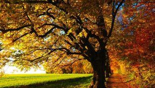 Foliage: 6 posti dove ammirare uno splendido panorama autunnale in Italia e all'estero