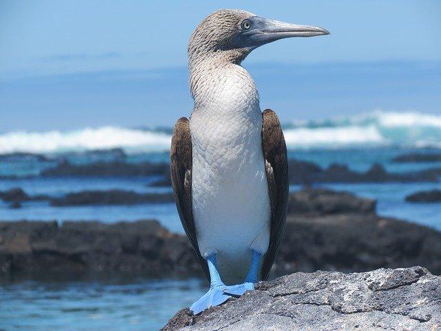 Galapagos in Ecuador
