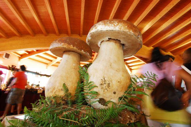 Appennino Parmense: Fiera del Fungo Porcino di Albareto